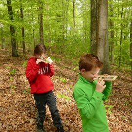 Waldführung am Annaberg